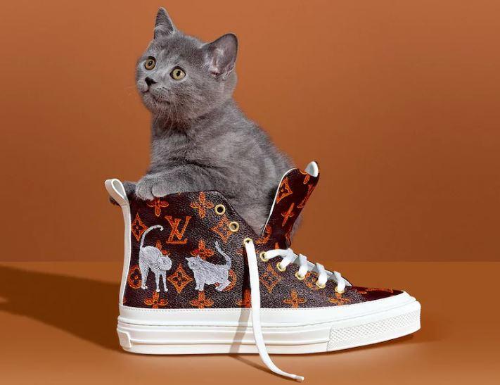 LV Cat